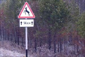 Штраф за сбитого лося в зоне действия знака